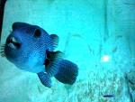 Sea aquarium Zella-Mehlis, Germany