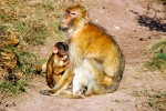 Thüringer Zoo Park Erfurt, Germany