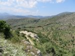 Olive groves around Mycenae