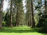 The botanical garden, Benmore, Scotland