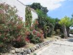 Colorful flora, Kerkyra, Greece