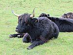 Highlanders on Mull, Scotland