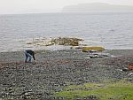 Searching for shells along Loch na Keal