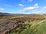 Landscape at Crathie, Scotland