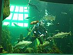 In the MacDuff sea aquarium
