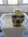 Skull of Petralona man