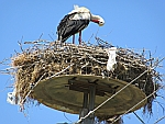 Stork nest in Feres, Thrace, Greece