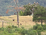 Vulture spotting in the Dadia forest