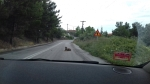 Dog on the road, Upper Volos