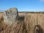 Pictic stones in a field, Scotland
