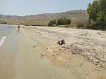 A polluted beach at Karystos with a dead sea turtle